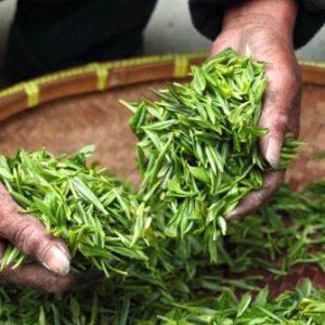 Incredible Health Benefits of Herbal and Green Tea